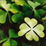 luck-clover-e1285418422221