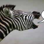 zebra-social-media-expert-e1290685690589